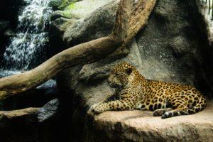 Volunteer in Costa Rica- wildlife