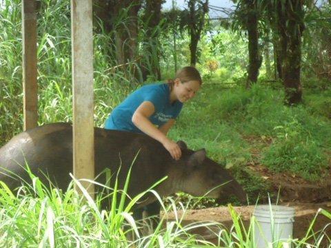 wildife conservation volunteer in costa rica