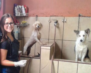 veterinary volunteer program